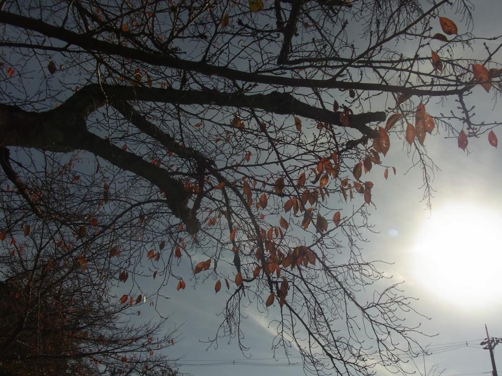 秋だった。